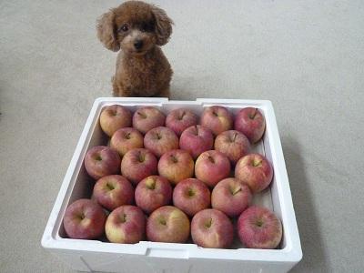 リンゴとコロン.JPG